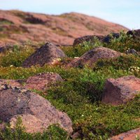 Diamond-and-Gold Flecked Rocks in Canada's Far North May Signal Huge Riches
